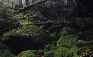 【神々が棲む屋久島】白谷雲水峡から原始的な森を抜けて宮之浦岳縦走
