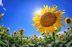 【ノスタルジー】毎日が天国だった少年時代の夏に負けない夏を目指す