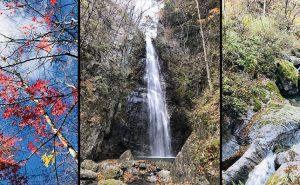 膝痛を抱えて奥多摩・川苔山と百尋の滝へ!!【リハビリ・ハイキング】