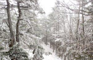 【雪山で戯れる】長野で登山・スキー・温泉・食事のフルコースを堪能♪