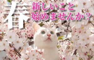 【春の風物詩と言えば…】新しいことを始めるには最適のシーズンです!!