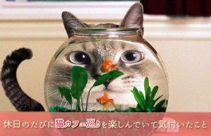 【最新猫カフェ事情】たくさんの猫カフェを巡る中で見えてきた繁盛店の秘訣