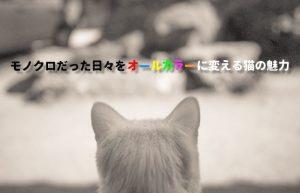 【猫と暮らすメリット】いつも一緒にいてくれる小さな友達の大きな魅力