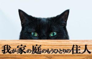【我が家の庭に住み着いた猫の話】片前足を引きずって帰ってきた日のこと