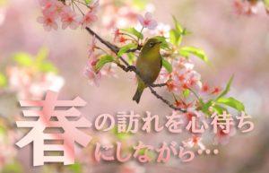 【一度は見たい弘前市の桜トンネル】春に向けて今から旅の計画を準備中