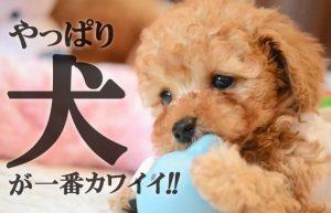 【結局犬が一番カワイイ説】実はこんなに違う!雄犬と雌犬の性格差!!