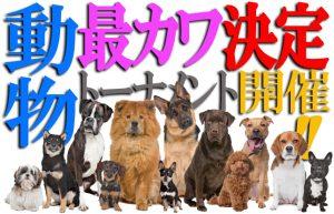 【犬よりカワイイ動物はいるのか?】グーグル先生を頼りに探してみた