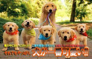 【結局犬が一番可愛い説②】やんちゃな雄犬の魅力はギャップ萌え!?