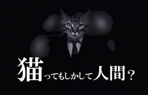 【うちの猫が少し変】10年も飼っていると猫も人間化してくるのかも!?