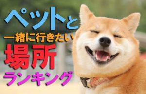 【ペットと楽しむアミューズメント】犬同伴で行きたいお出かけスポット