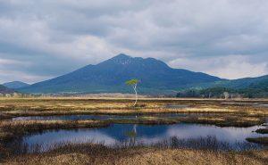 【遥かな尾瀬を散策】本州最大の湿原「尾瀬ヶ原」で満開の水芭蕉を楽しむ!