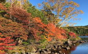 【北八ヶ岳で紅葉&岩峰ハイキング】見渡すかぎり自然広がる秋の絶景