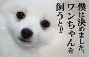 【五反田1年生(*^^)vPART12】秋って寂しいからペットが飼いたい!!