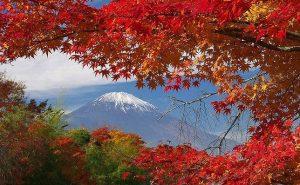 【バイクでGo!】東京都心を起点にして手軽に楽しめる紅葉狩りの名所へ!!
