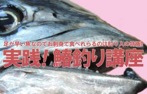 【スポーツフィッシング④】サバ科の大型高級魚・鰆(サワラ)釣りのポイントを解説
