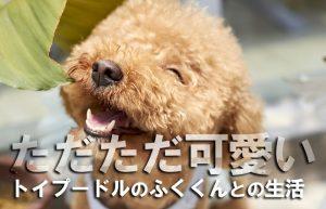 【五反田2年生(*^^)vPART2】カシャカシャ♪ビニール袋と戯れる我が家の愛犬