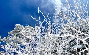 【東京から日帰り雪山ハイキング】標高2,500m前後の初心者向けルートをご紹介