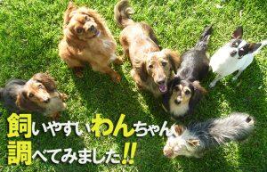 【突然ですが…犬飼いたい!】32歳独身と猫2匹が新しい家族を迎える…⁉