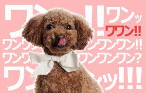 【五反田2年生(*^^)vPART4】毎日が充実して、めちゃめちゃ幸せな理由!